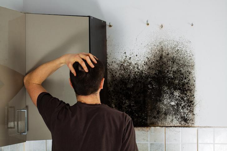 traitement humidité moisissure maison