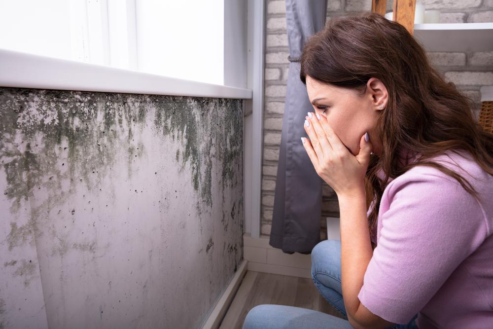 éliminez moisissure sur les murs